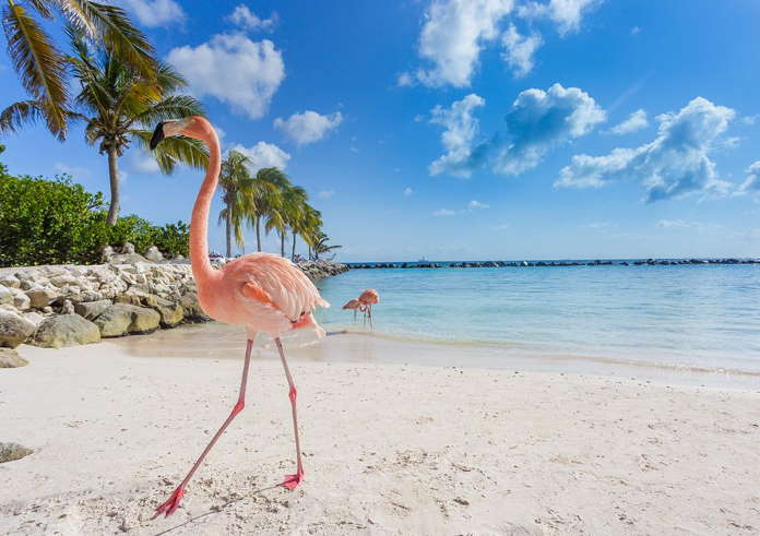 Ostrov-Vozrozhdenija-Aruba